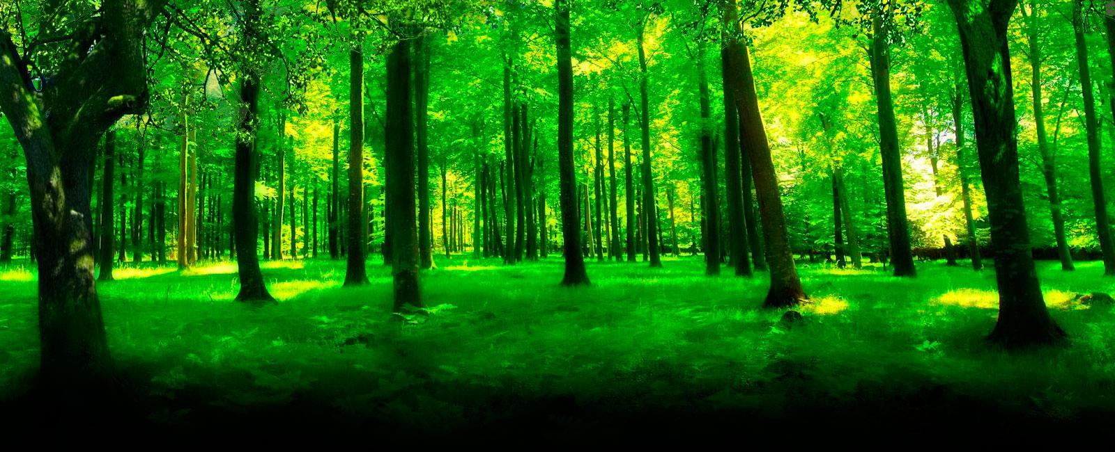 slide-bosque